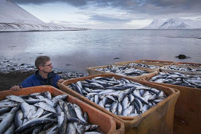 Рыба на экспорт