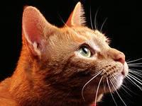 Кот чудом выжил после перелета из Афин в Цюрих