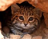 Страшные животные, которые опаснее чем вы думаете.