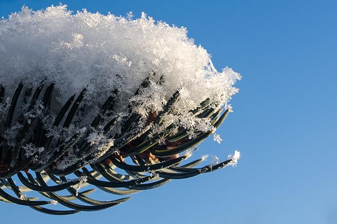 Зимняя прогулка - Снежинки