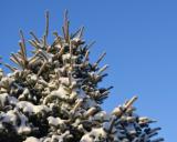 Зимняя прогулка - несколько фото и видео