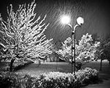 Ночная прогулка под снегом
